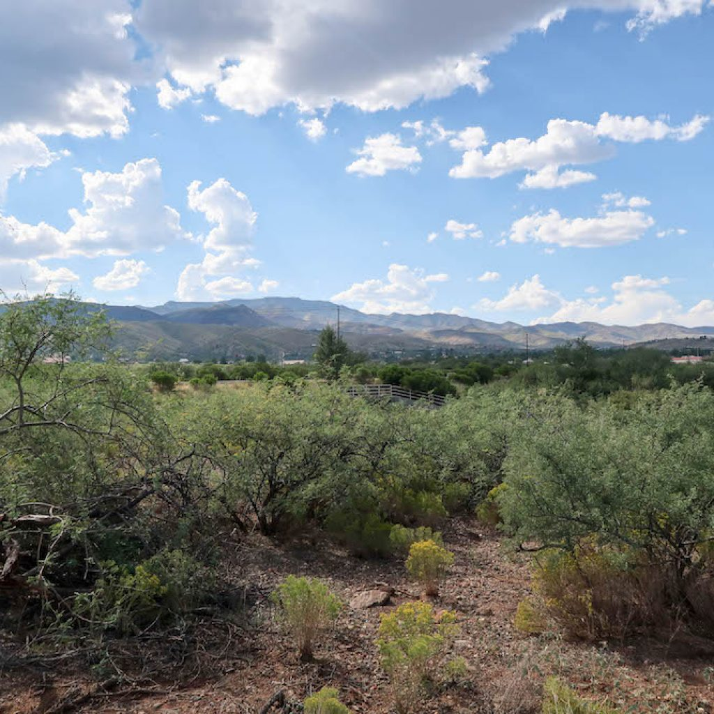 Vineyards at Cottonwood's Lot 19 Center View