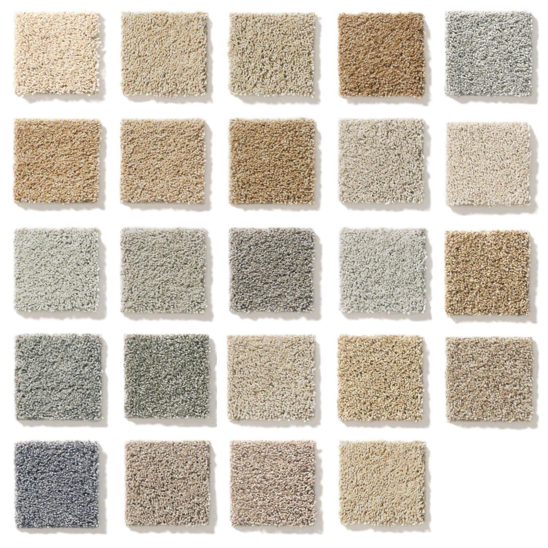24 standard carpet options